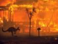 Природные пожары в Австралии не угасают