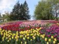 В Киеве проходит выставка цветов. Видео