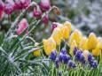 У ніч на 28 квітня в Україні очікуються заморозки
