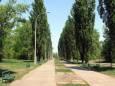 В Киеве займутся ремонтом парков