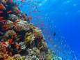 Гибель экосистемы Мирового океана возможна уже в этом десятилетии