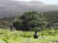 Названо самое одинокое дерево в мире