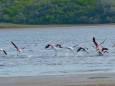 В Украину прилетели розовые фламинго