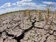 Украина из-за дефицита осадков потеряла 230 тысяч гектаров посевов