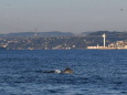 В пролив Босфор вернулись дельфины