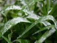 В Україні прогнозуються заморозки