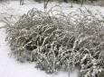 В Финляндию в мае вернулась зима
