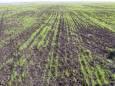 Засуха в Украине уничтожила более 200 тысяч гектаров озимых