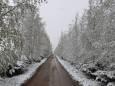 Зима в травні. Європу засипало снігом