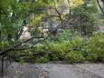 В Харькове сильный ветер повалил десятки деревьев