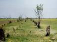 В Николаевской области зафиксирован случай незаконной вырубки деревьев