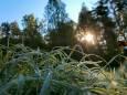 Заморозки на Прикарпатті пошкодили врожай