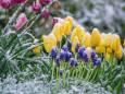 Капризный май. Украину вновь ждут заморозки
