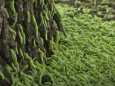 Гусеницы «захватили» парк Днепра