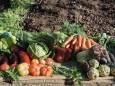 Лунный календарь огородника и садовода на июнь 2020 года
