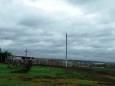 В Одеській області на ферму напала зграя шакалів