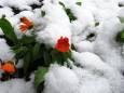 Под Киевом выпал летний снег