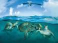 У берегов Австралии обнаружили десятки тысяч мигрирующих черепах