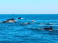 В Кирилловке дельфины делили акваторию с отдыхающими