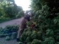 На Житомирщине сильный ветер повалил деревья