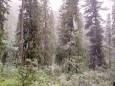 На юге Красноярского края выпал снег