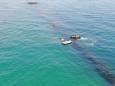 В Одессе спасают четырех дельфинов, которые застряли у волнореза