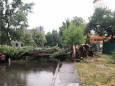 В Киеве гроза повалила деревья, ливень затопил улицы