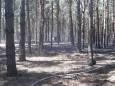 Под Николаевом гасили лесной пожар