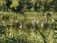 На озере в Днепре поселились цапли