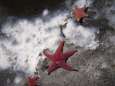 На морском дне Антарктики произошла утечка метана