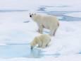 На арктичному архіпелазі зафіксована найвища в історії температура
