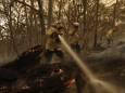 Пожары в Австралии погубили и дезориентировали почти 3 млрд животных