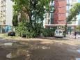 В Івано-Франківську негода ламала дерева і пошкодила автомобілі