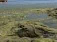 В Одесі з пляжу вивезли сотні тонн водоростей
