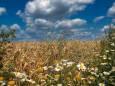 Погода в Украине на воскресенье, 9 августа
