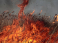 25 августа сохранится высокая пожарная опасность