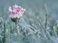 Синоптик спрогнозировал, когда в Украину придут заморозки