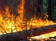Синоптики предупредили о чрезвычайной пожарной опасности