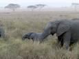 За останні 40 років популяції диких тварин скоротилися на 68%
