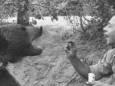 Ведмідь, який пройшов війну