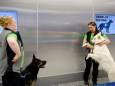 На пути коронавируса встали собаки