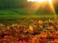 Погодні прикмети на 9 жовтня