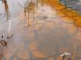 Засуха угрожает водно-болотным угодьям мира