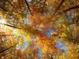 Погода в Україні на неділю, 11 жовтня