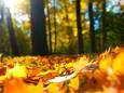 Погода в Україні на вівторок, 13 жовтня