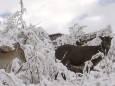 Ранні снігопади накрили західний Китай