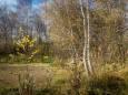 Погода в Украине на воскресенье, 25 октября