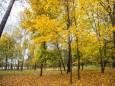 Погода в Украине на вторник, 27 октября