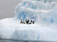 Гигантский айсберг может уничтожить пингвинов и тюленей на целом острове
