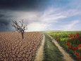 Клімат і попит на продовольство скоротить ареали проживання видів на 23% до 2100 року
